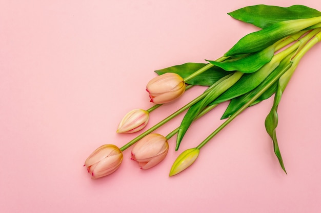 Zacht boeket tulpen geïsoleerd op lichtroze achtergrond. valentijnsdag of bruiloft romantisch concept, kopie ruimte, plat lag, bovenaanzicht