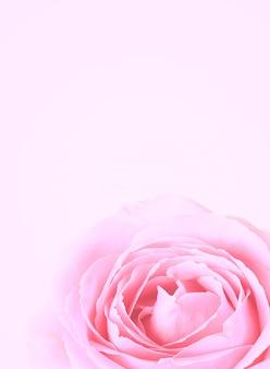Zachte achtergrond van roze roos