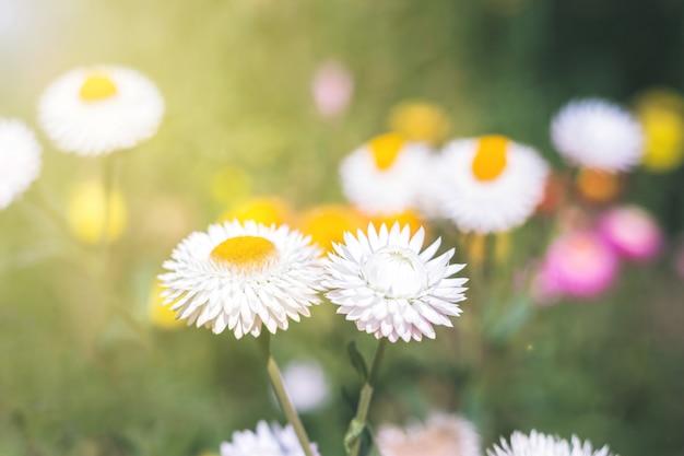 Zachte focus bloem achtergrond