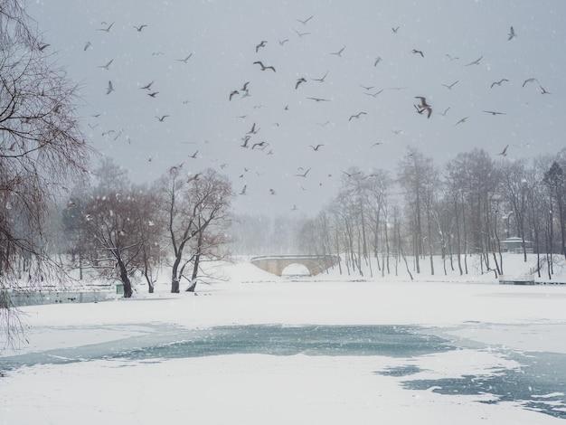 Zachte focus. wintermeer met patronen op het sneeuwdek van het water en veel vliegende meeuwen in het stadspark op een besneeuwde dag. gatchina. rusland.