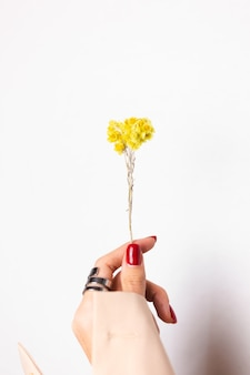 Zachte foto van de rode manicure van de vrouwenhand, ring op vinger, houdt leuke gele kleine droge bloem, wit vast.