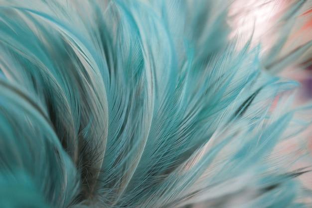 Zachte kleur van de textuur van de kippenveer voor achtergrond
