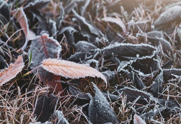 Zachte nadruk van vorst op de herfstbladeren gevallen op bruin gras