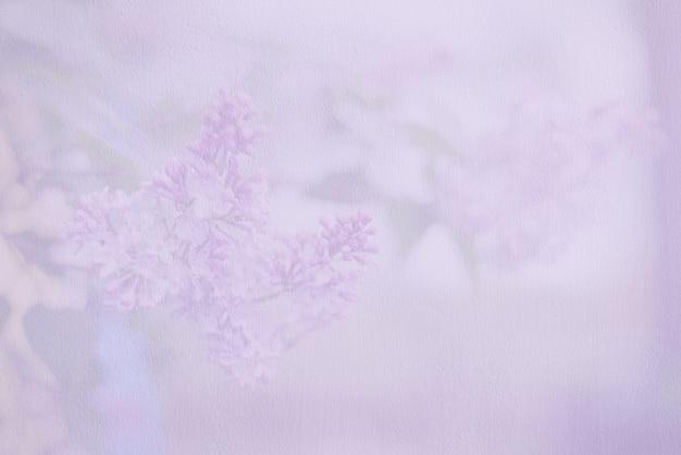Zachte onscherpe achtergrond of achtergrond met lila bloemen. bleke paarse muur.