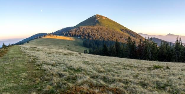 Zachte romige zonsondergang in karpatische bergen. met gras bedekte weide, pijnbomen en verre bergtoppen.