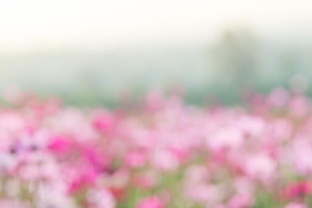 Zachte, selectieve focus van cosmos, wazige bloem voor achtergrond, kleurrijke planten
