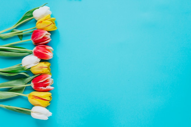 Zachte tulpen op blauwe achtergrond