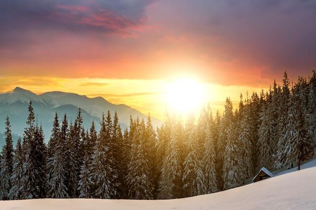 Zachte zonsondergang in de winterbergen met besneeuwde pijnbomen in donker sparrenbos.