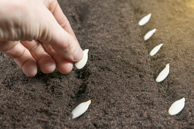 Zaden in de grond planten