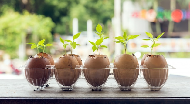 Zaden planten in eierschalen op houten tafel met groene natuur
