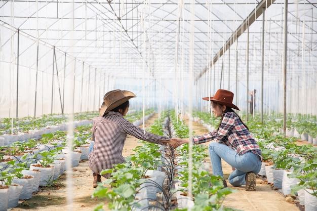 Zakelijke overeenkomst handen schudden in een meloen plantage