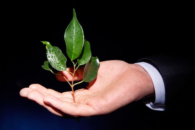 Zakelijke voorspoed onherkenbaar plantkunde duisternis