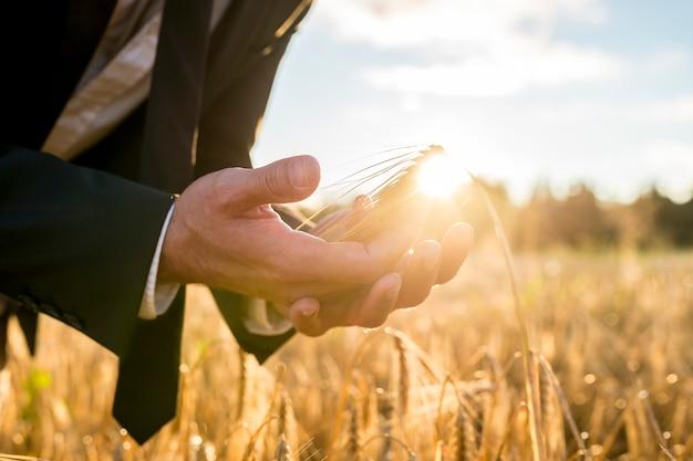 Zakenman die een rijp oor van tarwe in zijn handen tot een kom vormt