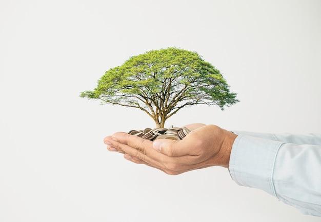 Zakenman met hoop munten binnen hand met boom op witte achtergrond, geldbesparing en investeringswinst groei concept.