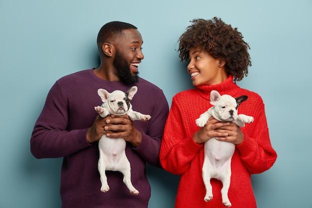 Zalige gelukkige zwarte jonge vrouw en man uiten positieve emoties tijdens fotoshoot met kleine schattige zwart-witte franse bulldog puppy's, geïsoleerd over blauwe muur. plezier hebben met honden