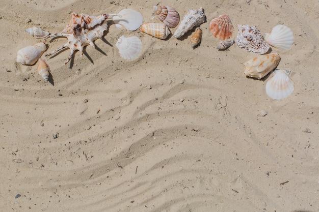 Zand achtergrond met zeeschelpen
