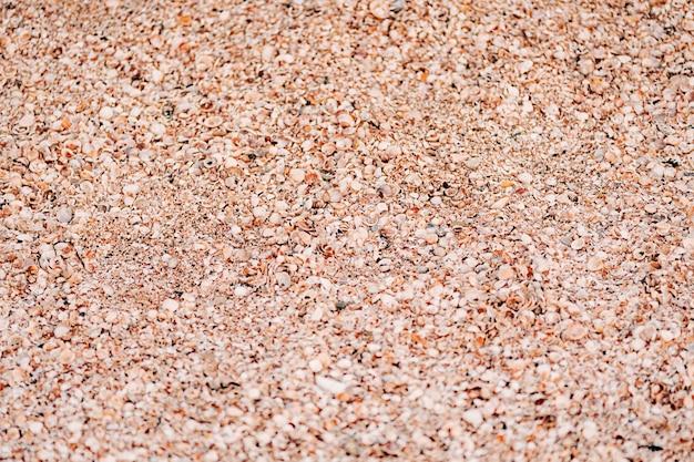 Zand en zeeschelp. schelpen door de zee-textuur.
