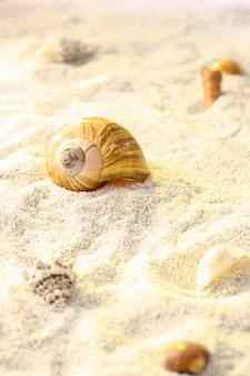 Zandachtergrond met shells en slakken op tropisch strand.