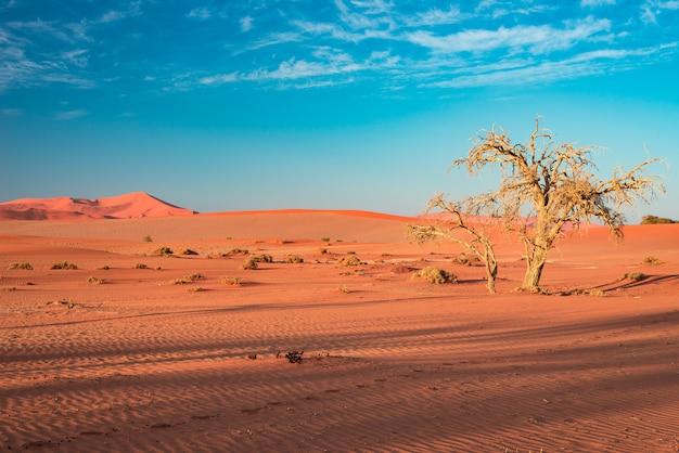 Zandduinen in de namib-woestijn bij dageraad, roadtrip in het prachtige namib naukluft national park, reisbestemming.