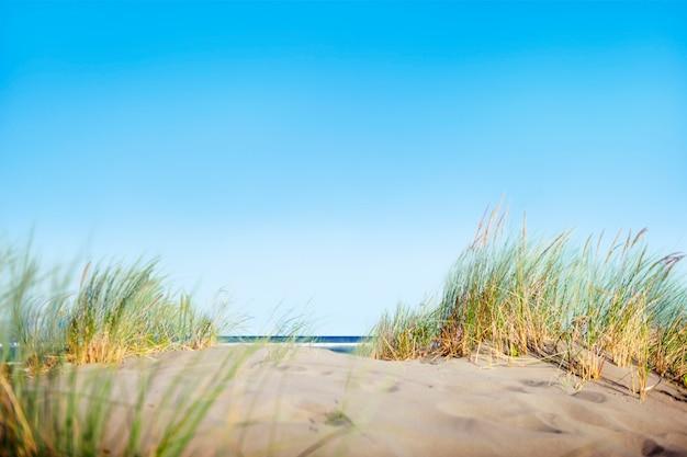 Zandduinen met gras op het strand