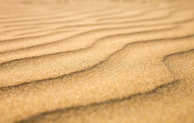 Zandgolven, strand aan de kust van ceylon
