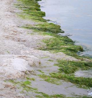 Zandige kust met groene algen na een storm,