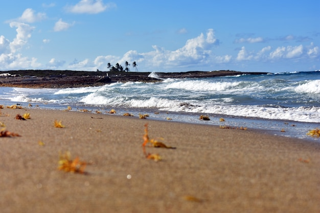 Zandkust van de atlantische oceaan. dominicaanse republiek