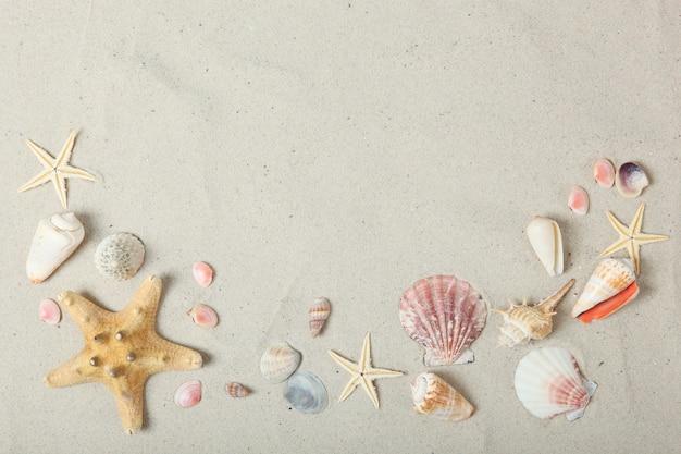 Zandschelpen en zeesterren bovenaanzicht met plaats voor tekst