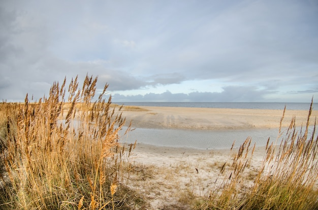 Zandstrand met gele hoog gras struiken in de buurt van de zee in duitsland. bewolkte koele dag en grijze bewolkte hemel. vakantie aan zee in het koude seizoen