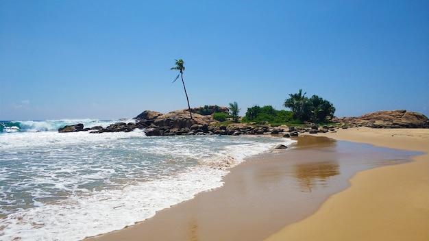 Zandstrand met palmbomen door de oceaan