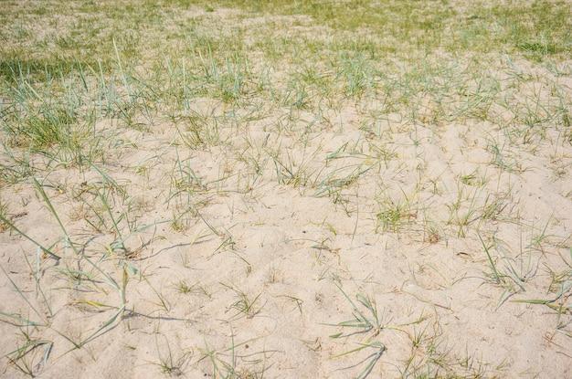 Zandveld met gras groeit
