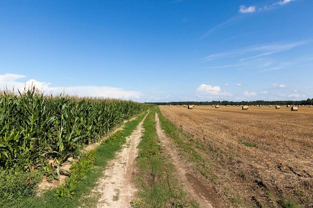 Zandweg in het veld door maïs en granen, zomer