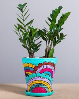 Zanzibar gem, zamioculcas, zz plant in de handbeschilderde pot
