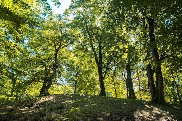 Zeda-gordi, georgië. bos van okatse canion.georgia.