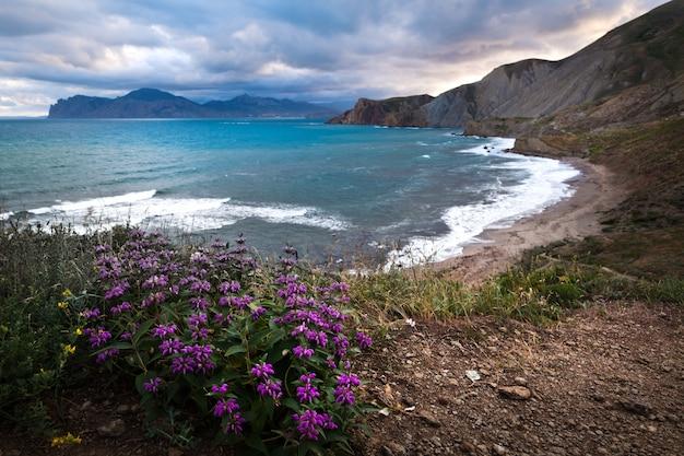 Zee, bergen, violette bloemen, hemel met wolken