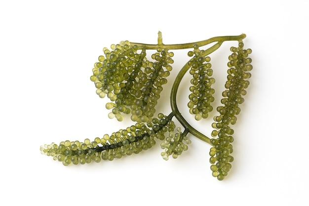 Zee druiven of groene kaviaar geïsoleerd op een witte achtergrond, het is een eetbare waterplant