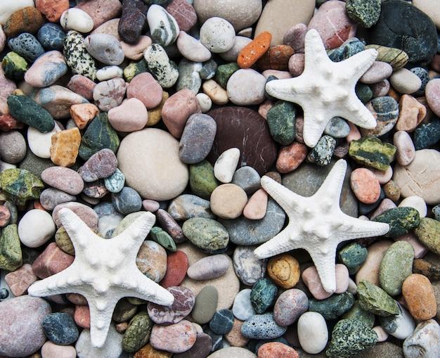 Zee kiezelsteen stenen en zeesterren