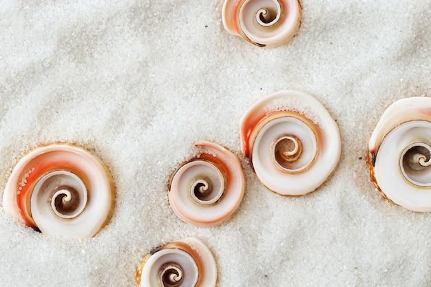 Zee met ruimte om te gaan. zomer concept. zeeschelpen op wit zand. bovenaanzicht. wervelende schelpen. bovenaanzicht. plat liggen.