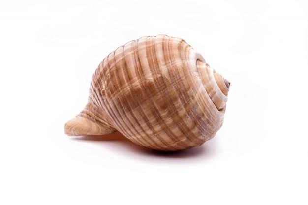 Zee natuurlijke schelp Premium Foto