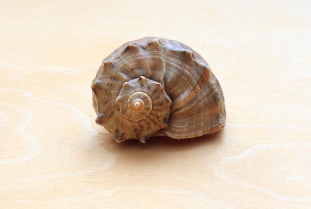 Zee schelp