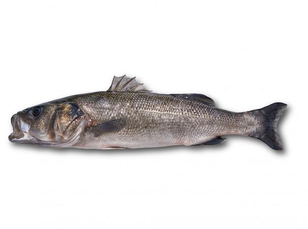 Zeebaars robalo vis wild groot formaat