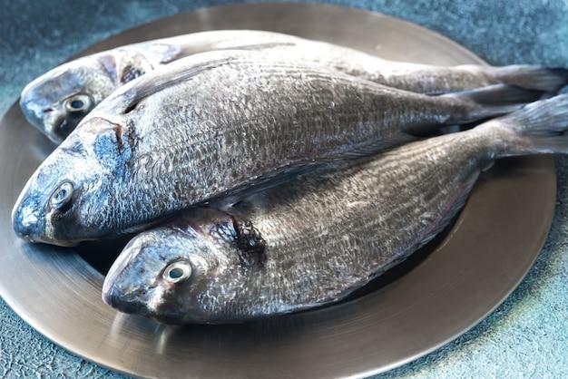 Zeebrasem (dorada) vis