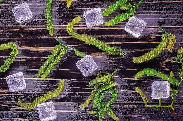 Zeedruiven (groene kaviaar) zeewier,