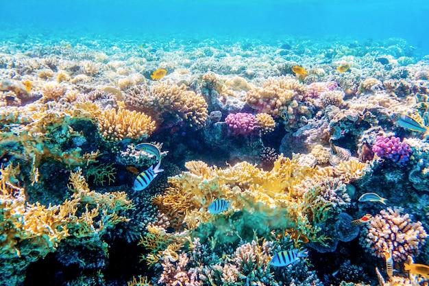 Zeegezicht met tropische vissen en koraalriffen