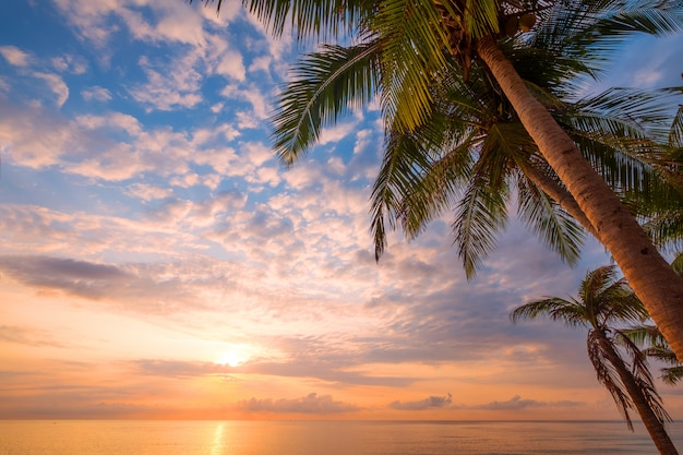 Zeegezicht van prachtige tropische strand met palmboom bij zonsopgang. uitzicht op zee strand in de zomer achtergrond.