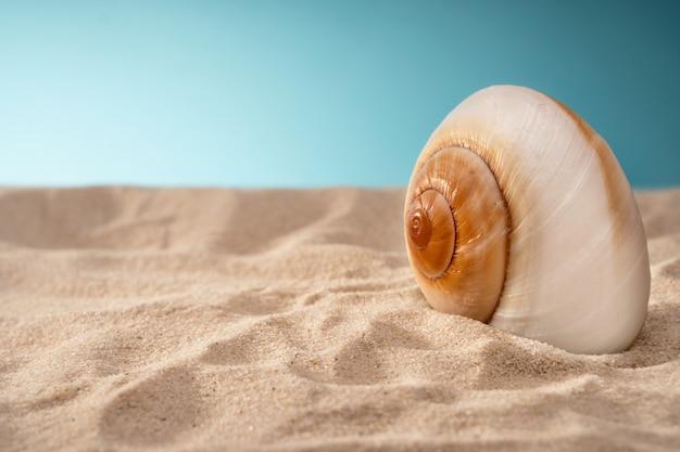 Zeegezicht zeeschelpenzand, vakantieprentbriefkaar. zeedieren.