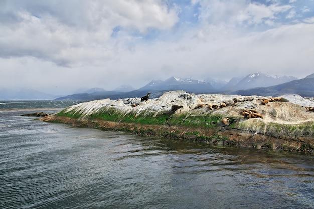 Zeehonden op het eiland in het beaglekanaal sluiten de stad ushuaia in argentinië