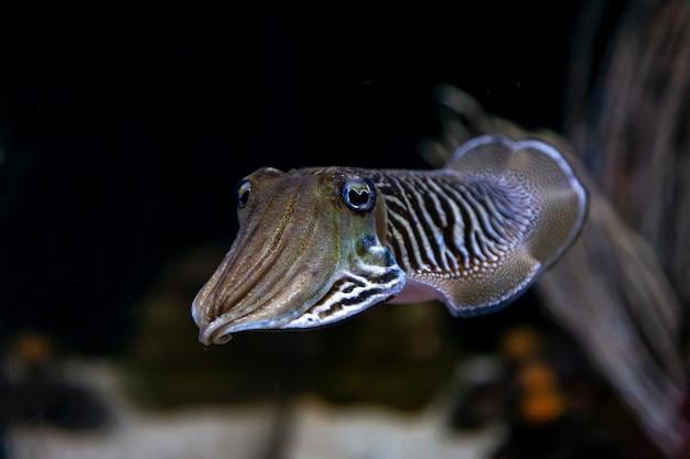 Zeekatvissen ecosysteem oceanarium in het grote aquarium