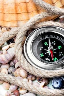 Zeekompas en zeeschelpen