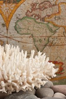 Zeekoraal